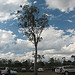 Lone tree in the carpark