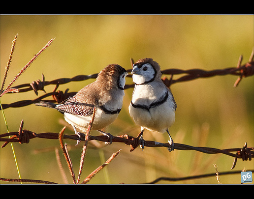 love birds pictures. Love birds