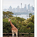 The classic Taronga shot