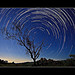 Tree Star-trails